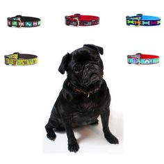 Bright bones, Neighbour, Dogs, Big bones, Nuts Dog Collar BY Pets Manic | Shoppertise Online Shopping - Malaysia