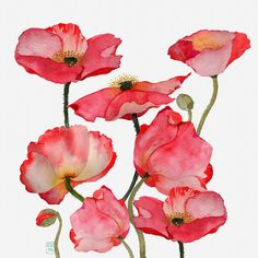 http://deepcoveflowers.blogspot.ca/2014/01/poppies-and-more-poppies.html