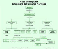 Resultado de imagen para mapa conceptual del sistema nervioso