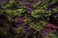 Mossy Macro photo by patch http://rarme.com/?F9gZi