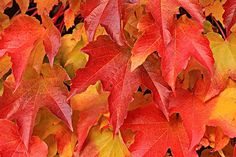 pixel2013 | Pixabay - 9