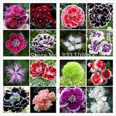 プロモーション! 200ナデシコ種子、16種類混合詰め、甘いウィリアム花、簡単に育て、高発芽diy garen