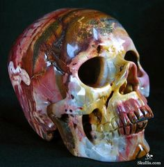 African Petrified Wood Carved Crystal Skull