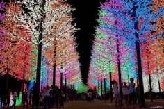 Some Holiday Spirit, from across the world in Malaysia. Marvelous!