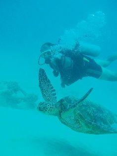 Oahu Private Scuba Diving Tours