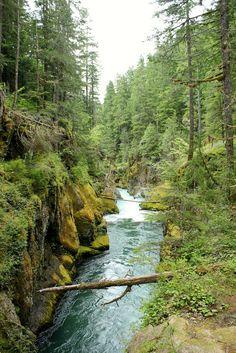 wanderthewood:Mt. Rainier National Park, Washington by louveciennes