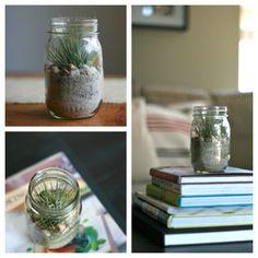 How to Make a Terrarium: How To Make A Terrarium With Small Glass Jars Decor Terrarium Diy, Mason Jar Terrarium, How To Make Terrariums, Air Plant Terrarium, Vase Crafts, Mason Jar Crafts, Mason Jar Diy, Diy Jars, Beach Jar