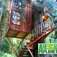 treehouse masters hoy a las 10pm en
