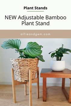 Plant Stands #plant #plantstand #interiorplant #houseplant Indoor Planters, Planter Pots, Bamboo Plants, Interior Plants, Acacia Wood, House Plants, Eco Friendly, Home And Garden, Diy Projects