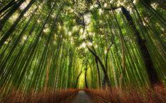 Fond d'écran hd : chemin de forêt