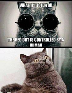 The Matrix,  kittycat-style.