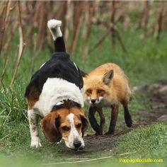 Foto di animali insoliti (26 foto). Foto 25