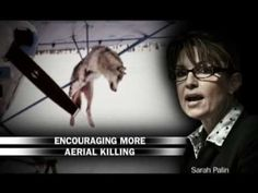 Hypocritical anti-Palin ad from radical pro-abort Ashley Judd from 2009. The words she uses when talking about the wolves here is exactly what she supports doing to the innocent human beings in the womb. Complete hypocrisy! Judd thinks the lives of wolves are more important than the innocent human lives in the womb.