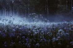 Image about photography in forest/pagan/witch/goth/moon🌑 by dark paradise Nature Aesthetic, Blue Aesthetic, Yennefer Of Vengerberg, Ravenclaw, Belle Photo, Twilight, Mists, Nature Photography, Photography Tips