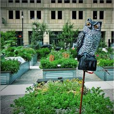 From Blight to Blossom: Urban Gardens Take Root in Detroit