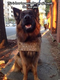 Funny Dogs - Will you marry my dad (115 Pics)