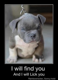 Watch out for the ferocious pit bull!