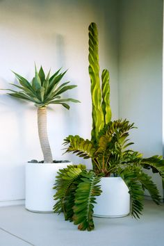 How To Use Succulent Landscape Design For Your Home Types Of Succulents, Succulents In Containers, Planting Succulents, Indoor Cactus, Cactus Plants, Indoor Plants, Cacti, Contemporary Landscape, Landscape Design