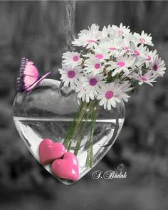 Splash of Colour Heart Wallpaper, Love Wallpaper, Wallpaper Backgrounds, Color Splash, Color Pop, Colour, Pink Love, Pretty In Pink, Beautiful Flowers