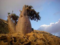 Photo from Yemen - WAYN.COM