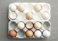 달걀의 재발견_먹이