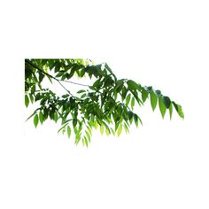 07.png ❤ liked on Polyvore featuring trees, foliage, nature, plants, garden, detail and embellishment
