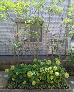 以前庭のリフォームさせていただいたお客様宅にて。 玄関開けたらこれ。 アジサイ・アナベルが毎年よく咲いてくれてます。…