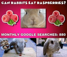 Bunbun tries out and gives proper information about feeding rabbits this delicious nutritious treat Rabbit Eating, Rabbit Food, Rabbit Gif, Rabbits, Raspberry, Bunny, Canning, Pets, Animals