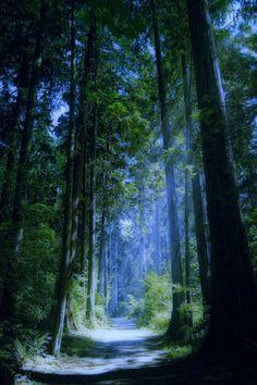 mykindafairytalee:    (via Fey Things / Enchanted Forest.)
