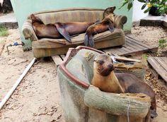Seal Loungeroom, taken on Isabella, Galapagos.  Ryan Essex/National Geographic Traveler Photo Contest