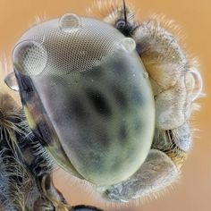 #Huawei #p9 #photographs #photography #beautiful #macrophotography #macro #macros #macrography #extrememacro #fly #fokus #lovemacrophotography #macrofoto #animal #animals #alien #staking #zerenestacker #fokus #extrememacrography #lovemacrophotography #fiftyshades_of_macro #flymacro #mantis #igmw_macro #macroclique #macroshot #smartfone #bee #instapictI #dragonfly