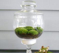 Moss Terrarium,   Elegent Moss Terrarium, Glass Pedistool Apothercary Jar, Great Housewarming Gift, Number 1