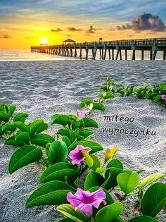 Beautiful Nature Wallpaper, Beautiful Landscapes, Beautiful World, Beautiful Images, Juno Beach Pier, Palm Beach, Landscape Photography, Nature Photography, Beach Flowers