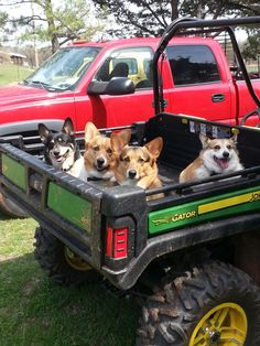 This will be me :) driving around with a load of Corgis :)