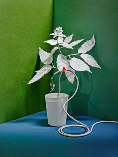 Plants have electrical and chemical signalling systems, may possess memory, and exhibit brainy behavior in the absence of brains.