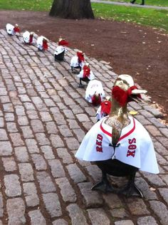 In the Public Garden Mrs. Mallard and her ducklings are showing their team spirit! Go Red Sox!