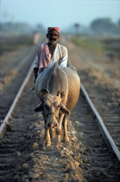 While grazing his cow, a Pakistani farmer walks over rail tracks in Sindh Province of Pakistan...