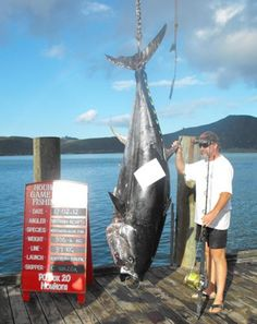 New Record Skipjack Tuna Landed in New Zealand?