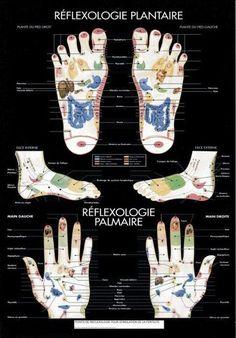 Hand Reflexology, Tai Chi, Body Map, Yoga, Homeopathy, Chiropractic, Life Science, Health Fitness, Massage