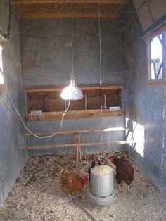 inside chicken coop pics | inside chicken coop | Flickr - Photo Sharing!