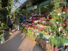 Parisian markets are some of the best in Europe and in the heart of the city on Île de la Cité you'll find Marché aux Fleurs. Click the link to find out more!   http://mikestravelguide.com/things-to-do-in-paris-stroll-through-the-flower-market-marche-aux-fleurs-reine-elizabeth-ii/