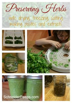 Preserving herbs is easy and way cheaper than buying herbs and spices already preserved. Herbs can be preserved by drying or freezing them, putting them in salt and making extracts.