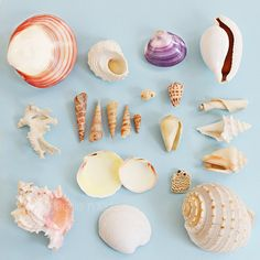 this is a good reference photo for different shells