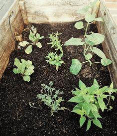 Basel, Succulents, Plants, Succulent Plants, Planters, Plant, Planting