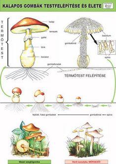 Környezetismeret | Comenius 2010 Bt. Environmental Studies, Life Cycles, Elementary Schools, Teaching, Bookmarks, Montessori, Mushrooms, Study, Play