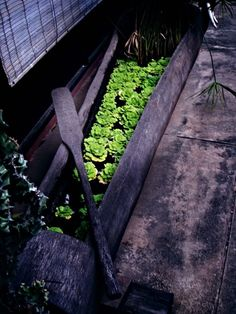 Cambodia: Water Lettuce in a Canoe  // Great Gardens & Ideas //