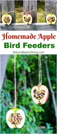 How to Make Apple Birdseed Homemade Bird Feeders, Apple Bird Feeders, Easy Homemade Bird Feeders, Great Fall Craft for Kids, Homemade Bird Treats, Apple Activities