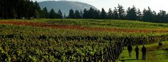 Located on a former mink farm, Cherry Point Estate wines is one of the longer established wineries in the Cowichan Valley.