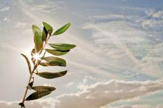 L'huile d'olive en Argentinehttp://www.passionolive.com/lhuile-dolive-en-argentine/