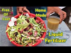 Compost, Organic Liquid Fertilizer, Kitchen Waste, Fish And Meat, Egg Shells, Health Tips, Cabbage, Nutrition, Homemade